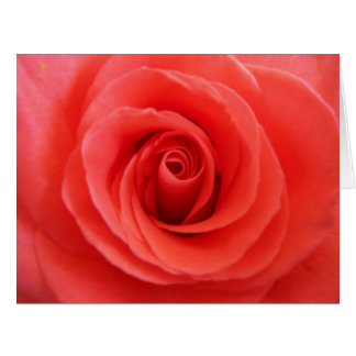 Coral Rose Greeting Cards