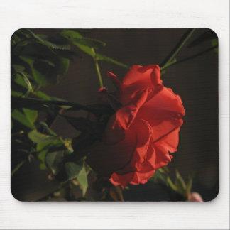 Coral Rose Mousepad