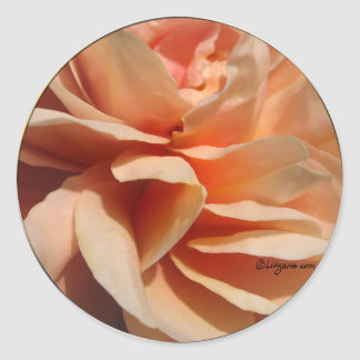 Coral Rose Wedding Envelope Seal Round Sticker
