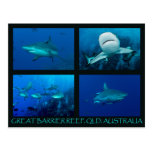 Coral Sea Postcard - Reef Sharks
