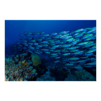 Coral Sea Tropical Fish School Poster