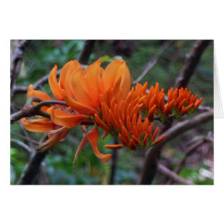 Coral Tree Card