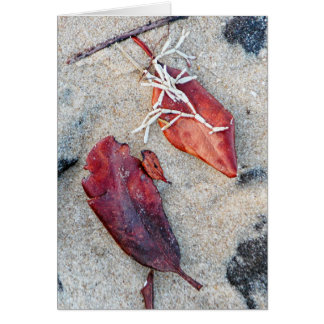 Coralline algae and leaves on sand greeting card