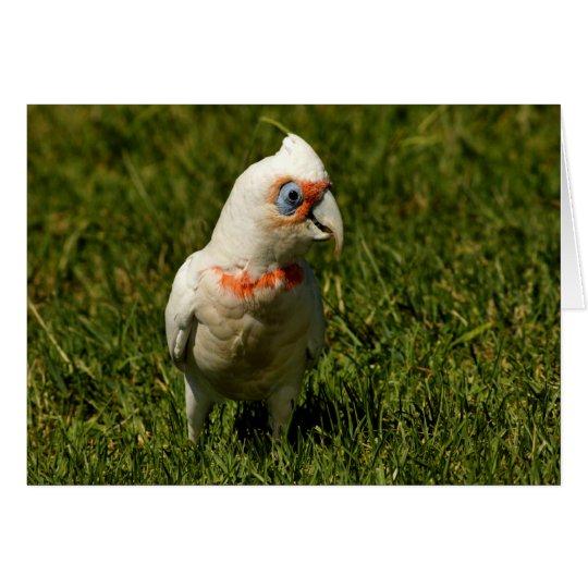 Corella beak bird feathers flying Australian bird Card