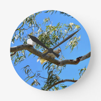 CORELLA BIRD QUEENSLAND AUSTRALIA ROUND CLOCK