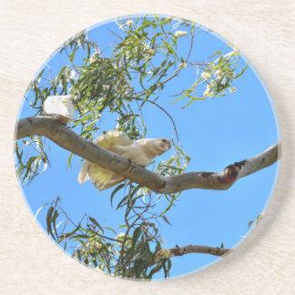 CORELLA BIRD QUEENSLAND AUSTRALIA SANDSTONE COASTER