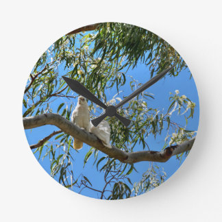 CORELLA BIRDS QUEENSLAND AUSTRALIA ROUND CLOCK