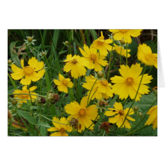Coreopsis lanceolata greeting card
