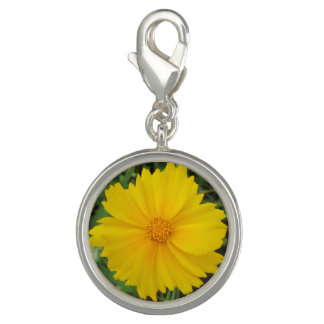 Coreopsis Yellow Flower Bloom