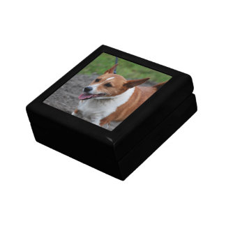 Corgi Gift Box