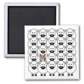 Corgi in the Sheep Square Magnet