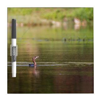 Cormorant bird swimming peacefully dry erase board