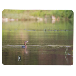 Cormorant bird swimming peacefully journal