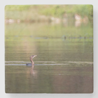 Cormorant bird swimming peacefully stone coaster