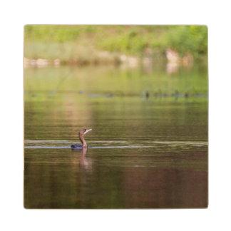 Cormorant bird swimming peacefully wood coaster
