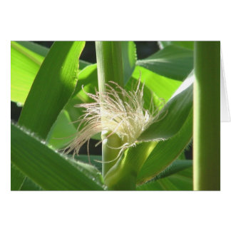 """Corn feathers"" Card"