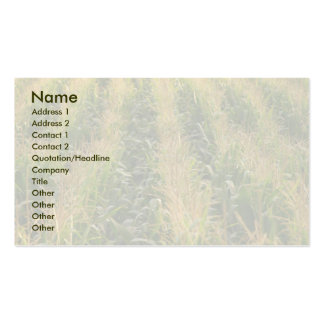 Corn field pack of standard business cards