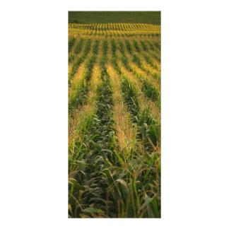 Corn field customised rack card