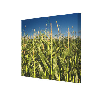Corn Field Nature Canvas from Original Photo Stretched Canvas Print