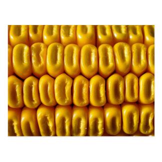 Corn Macro Postcard