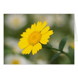 Corn Marigold Card