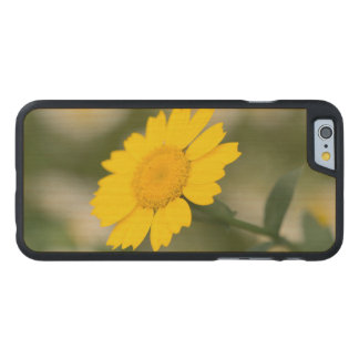 Corn Marigold Carved Maple iPhone 6 Case
