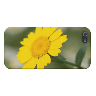 Corn Marigold Case For iPhone 5/5S