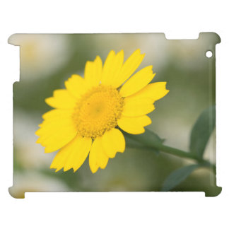 Corn Marigold Cover For The iPad