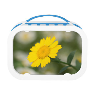 Corn Marigold Lunch Box