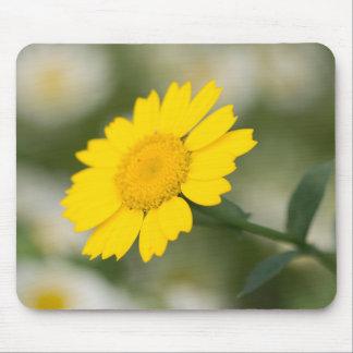 Corn Marigold Mouse Pad