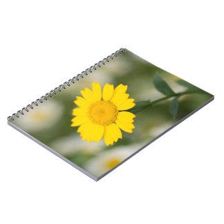 Corn Marigold Notebooks