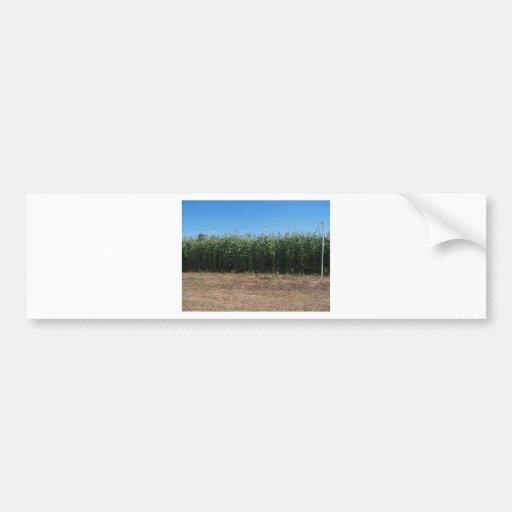 corn maze bumper sticker