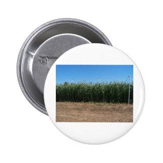 corn maze button
