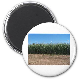 corn maze refrigerator magnets