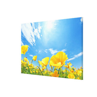 Corn Poppy Field Canvas Print