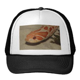 Corn snake cap