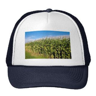 cornfield and sky trucker hat