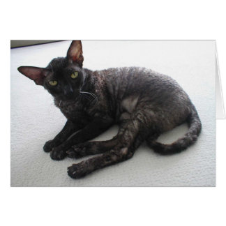 Cornish Rex Card