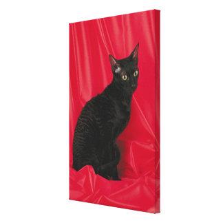 Cornish rex cat canvas print
