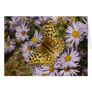 Coronis Fritillary on Aster Flowers at Grand Teton Card