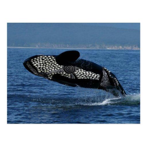 Corroboree Whale Post Card