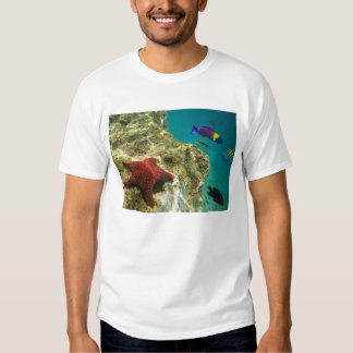 Cortez Rainbow Wrasse male and female and sea Shirts
