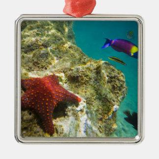 Cortez Rainbow Wrasse male and female and sea Silver-Colored Square Decoration
