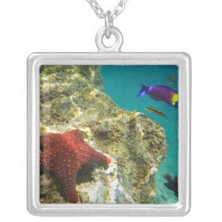 Cortez Rainbow Wrasse male and female and sea Square Pendant Necklace