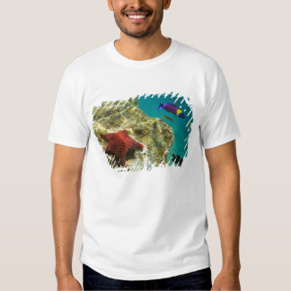 Cortez Rainbow Wrasse male and female and sea T Shirt