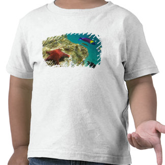 Cortez Rainbow Wrasse male and female and sea Tshirts