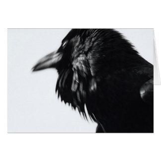 Corvus corax (Common Raven) Card