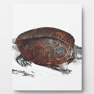 Cosmic turtle 1 plaque