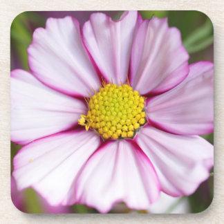 Cosmos Flower (bidens formosa) Coasters