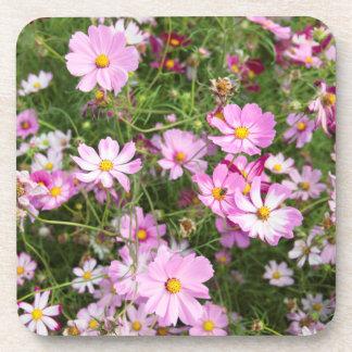 Cosmos Flower (Bidens Formosa). Kirkwood Beverage Coaster
